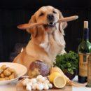 Как и чем кормить собаку: виды и особенности питания