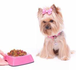 Питание Йорков: щенков, взрослых собак, составление меню и выбор корма