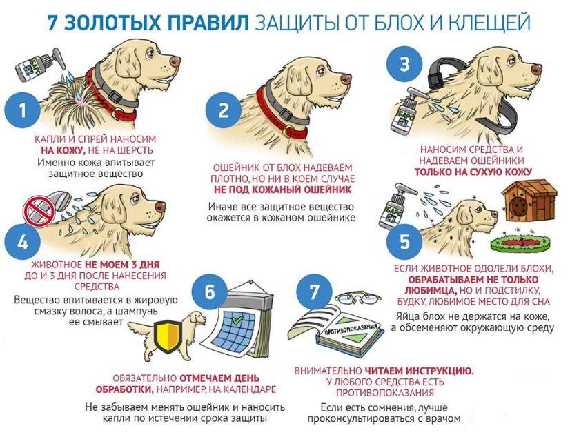 Основные правила защиты собаки от блох