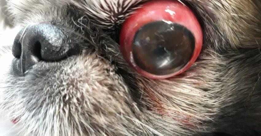 Вывих глазного яблока