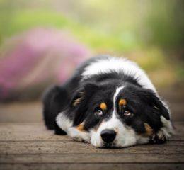 Что делать, если у собаки лишай: симптомы с фото, лечение и профилактика