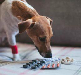 Заболевания кожи у собак: виды, симптомы и фото