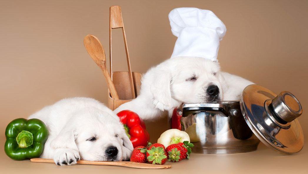 Собаки предпочитают натуральную форму кормления