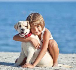 Что делать, если родители не хотят покупать собаку - способы уговорить