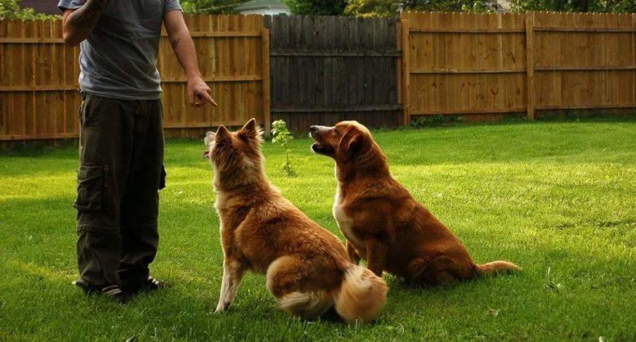 команда сидеть как научить собаку