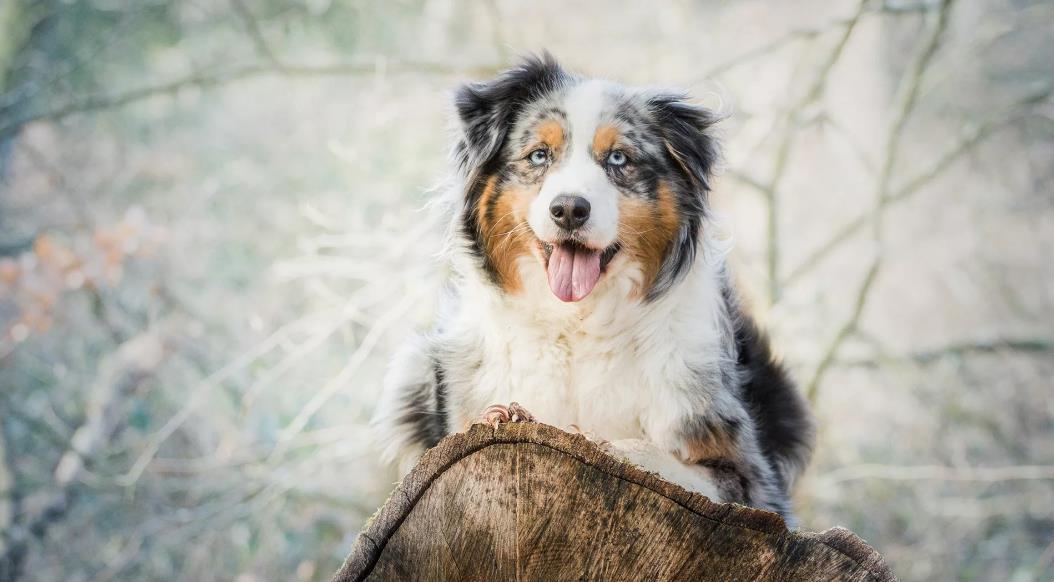 красивые породы собак