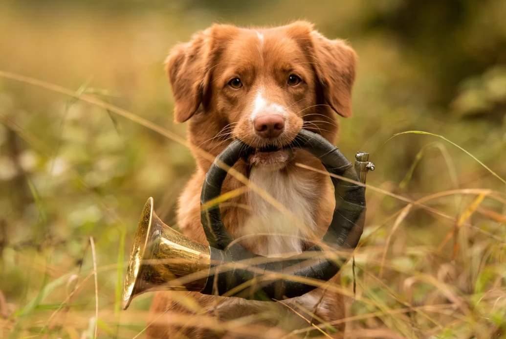 фото собаки толлер