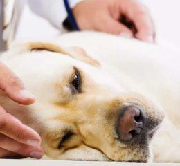 Как и чем лечить почечную недостаточность у собаки