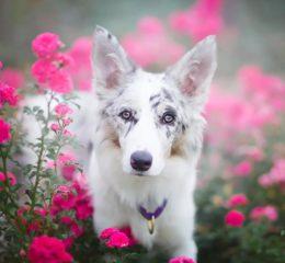 ТОП-20 - самые красивые породы собак в мире с фото и описнием