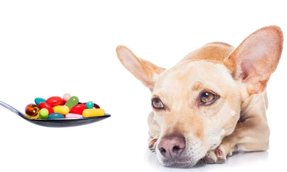 симпотомы почесной недостаточности у собак
