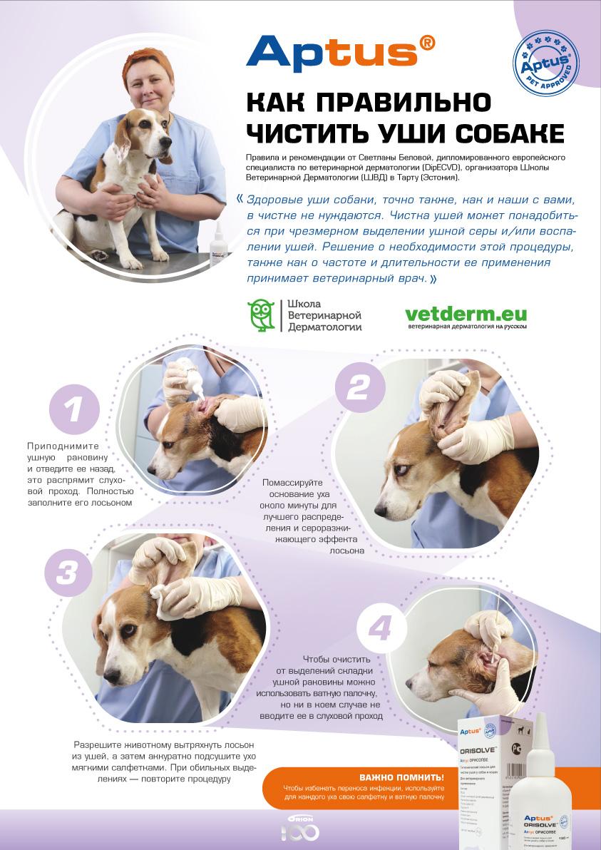 Памятка - как чистить уши собаке