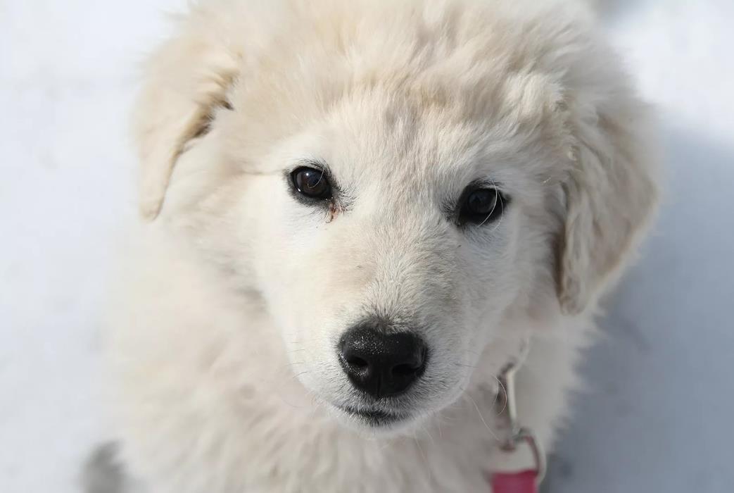 фото белого щенка