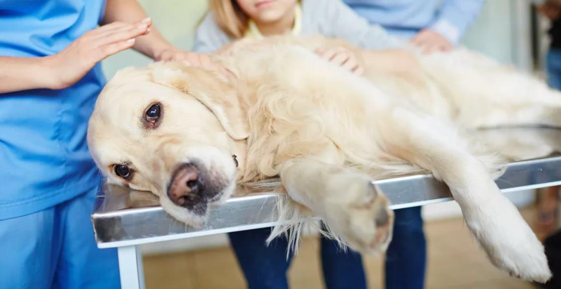 У собаки болят почки