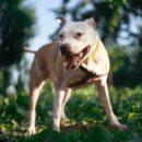 фото опасной собаки