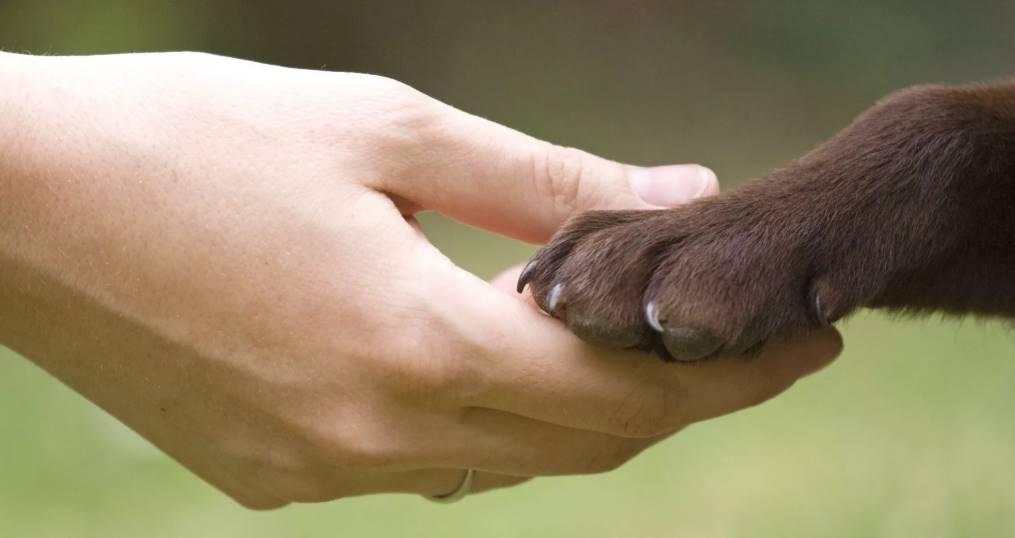 лапа собаки с когтями