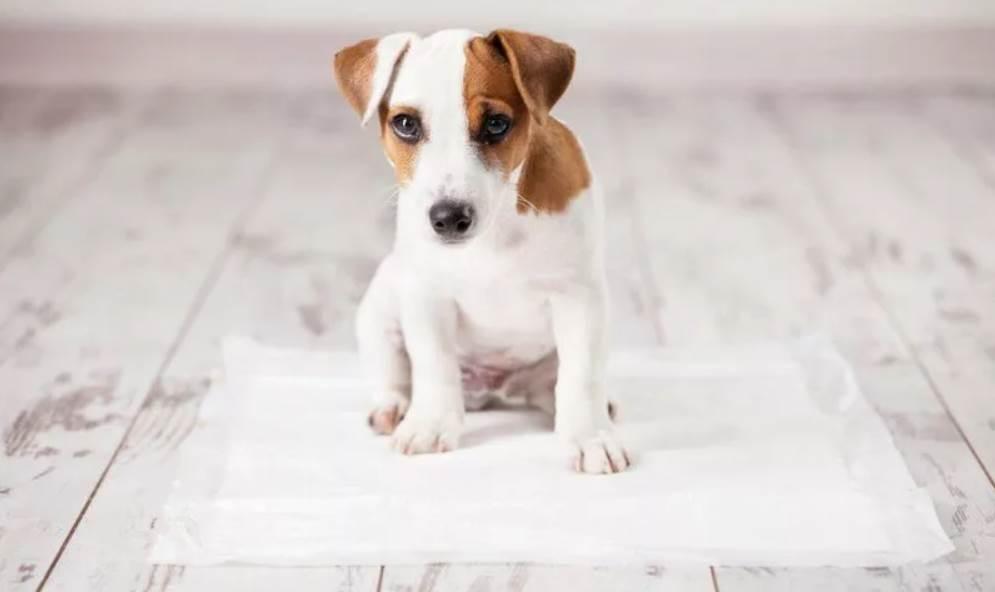 щенок на пеленке