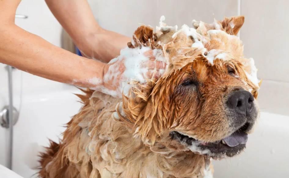 лучший шампунь для собаки