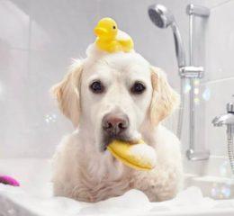 шампунь для собаки