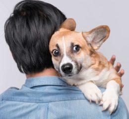 Как подобрать успокоительное для собаки: обзор лучших средств