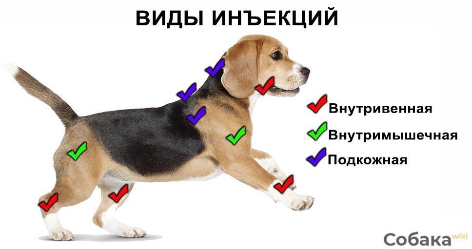куда делать укол собаке