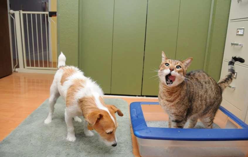 собака ест кал кота