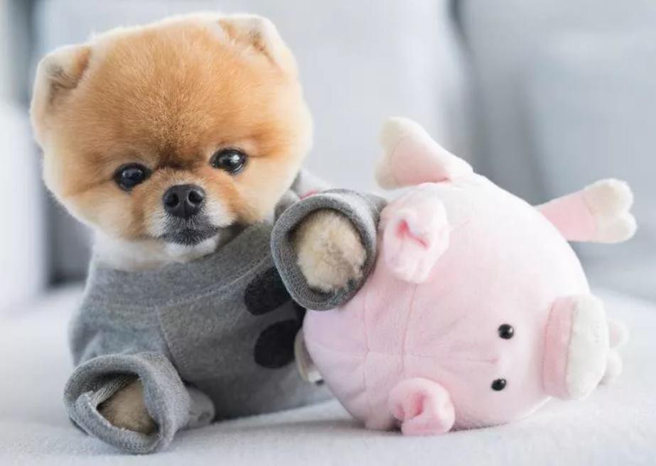 самая милая собака