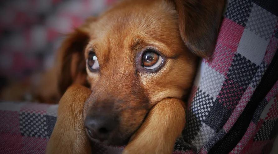 собака заболела судороги