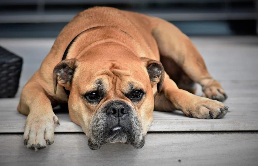 что делать если у собаки судороги