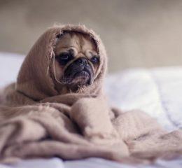 у собаки судороги