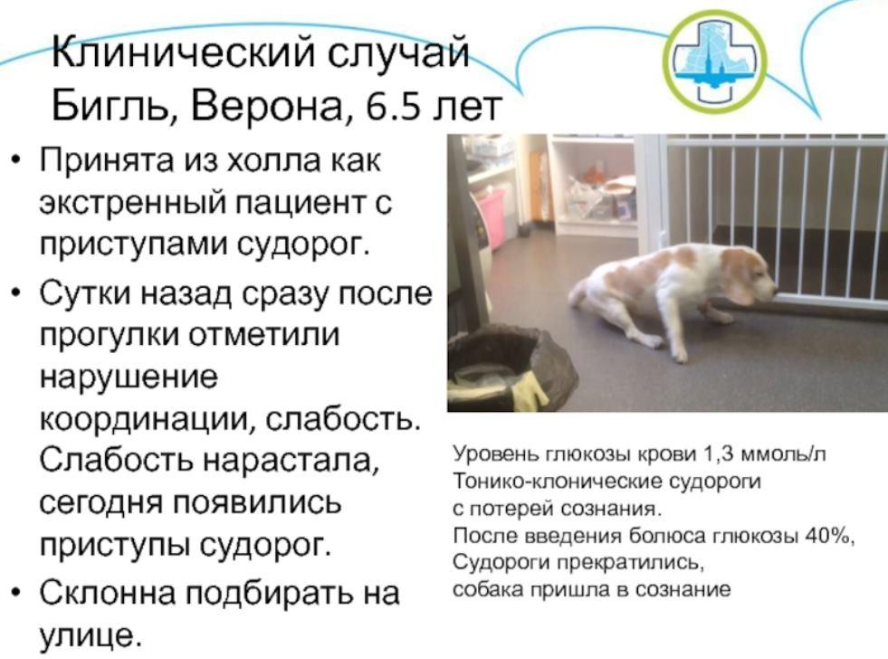 судороги у собаки клинический случай