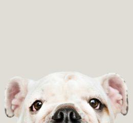 сухой нос у собаки