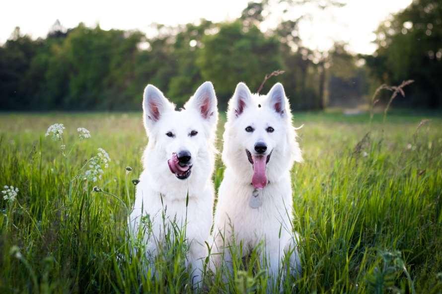собаки в траве