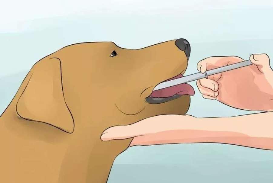 промывание желудка собаке