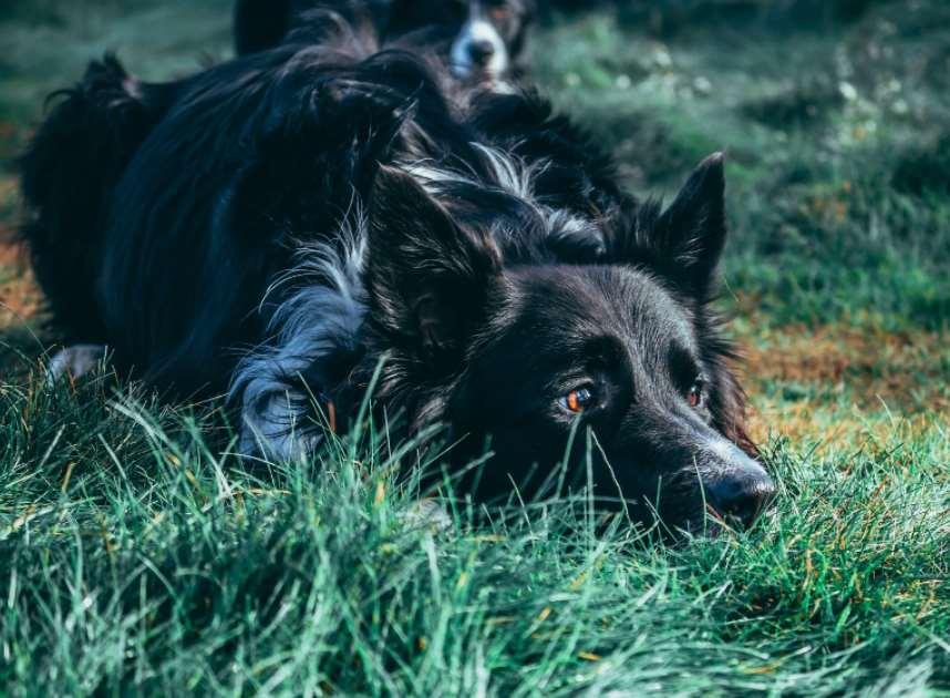 собаке плохо, после травы